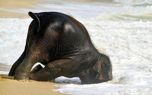 cute-baby-elephant-1